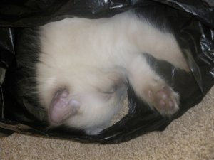 Baby Picture (has always liked bags)