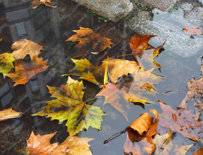 Autumn_leaves_01