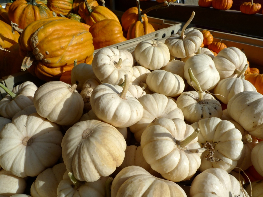 Decorative_Gourd_Season_(Davis_Ranch)